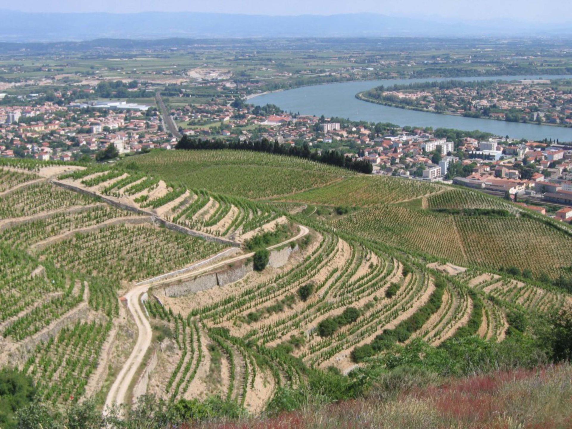 Bacchus, la découverte des vignobles