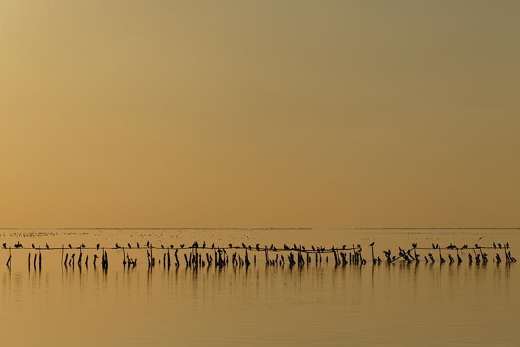 Vue sur la Camargue, aux Saintes-Maries-de-la-Mer